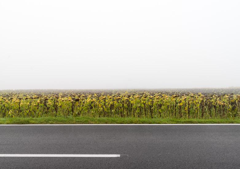 http://www.thomasebruster.com/files/gimgs/15_fog-15.jpg