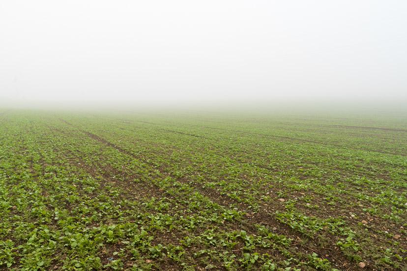 http://www.thomasebruster.com/files/gimgs/15_fog-7.jpg