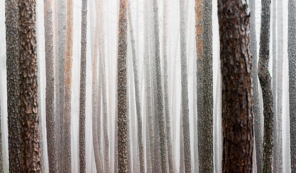 http://www.thomasebruster.com/files/gimgs/20_foggywoods-5.jpg