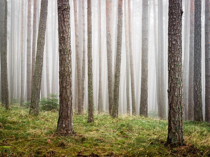 http://www.thomasebruster.com/files/gimgs/20_foggywoods-6.jpg