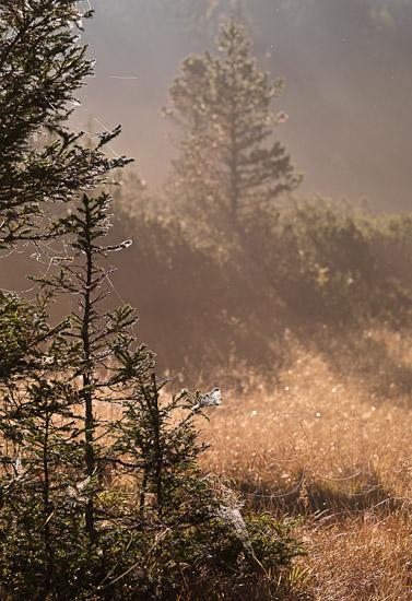 http://www.thomasebruster.com/files/gimgs/20_landscapefall-10.jpg