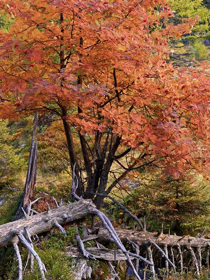 http://www.thomasebruster.com/files/gimgs/20_landscapefall-6.jpg