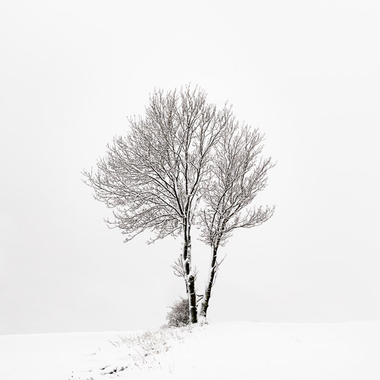 http://www.thomasebruster.com/files/gimgs/21_landscapewinter-8.jpg