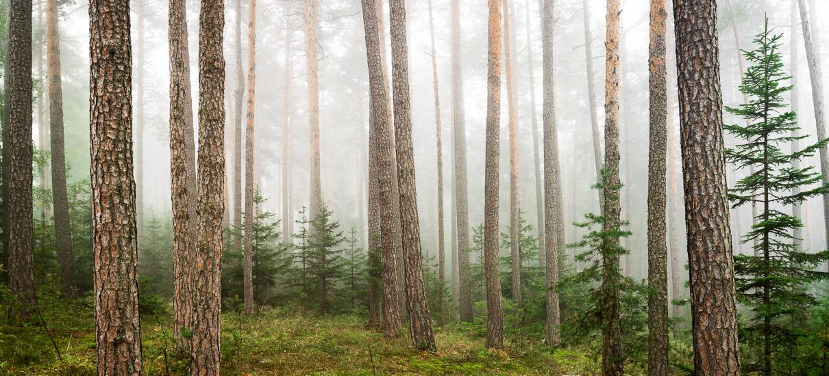 http://www.thomasebruster.com/files/gimgs/35_foggywoods-1.jpg