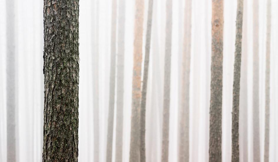 http://www.thomasebruster.com/files/gimgs/35_foggywoods-2.jpg