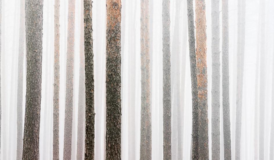 http://www.thomasebruster.com/files/gimgs/35_foggywoods-3.jpg