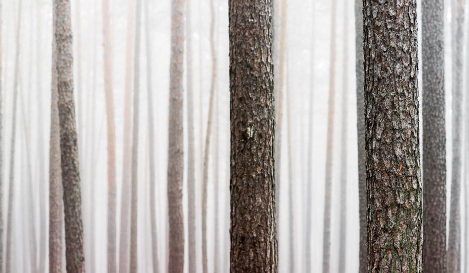 http://www.thomasebruster.com/files/gimgs/35_foggywoods-4.jpg